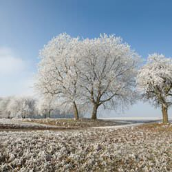 Frost covering trees and a grassy field in Munster